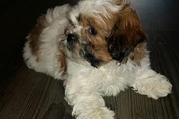 puppy-diva